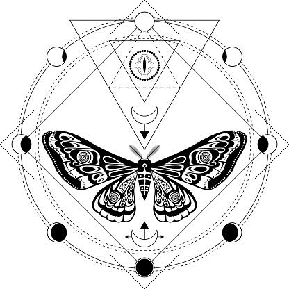 Night moth, butterfly pupa.