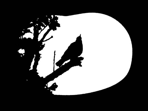 Nightingale/Songthrush Silhouette vector art illustration