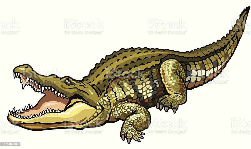 nile crocodile vector art illustration