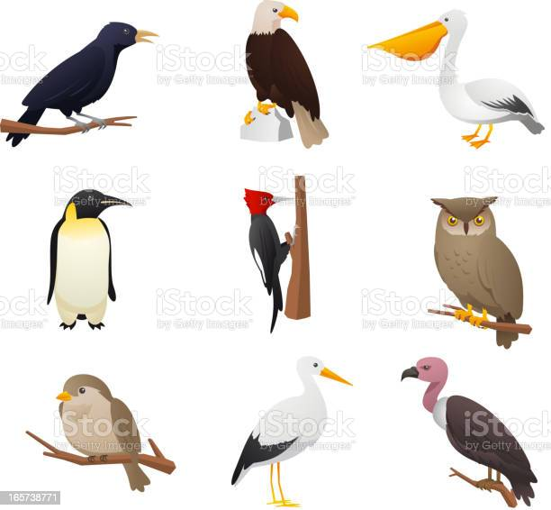 Nine bird collection 2 vector id165738771?b=1&k=6&m=165738771&s=612x612&h=hurqeugd8wmpurqe4c ehubdgkb b1agd1cm5xv4mxi=