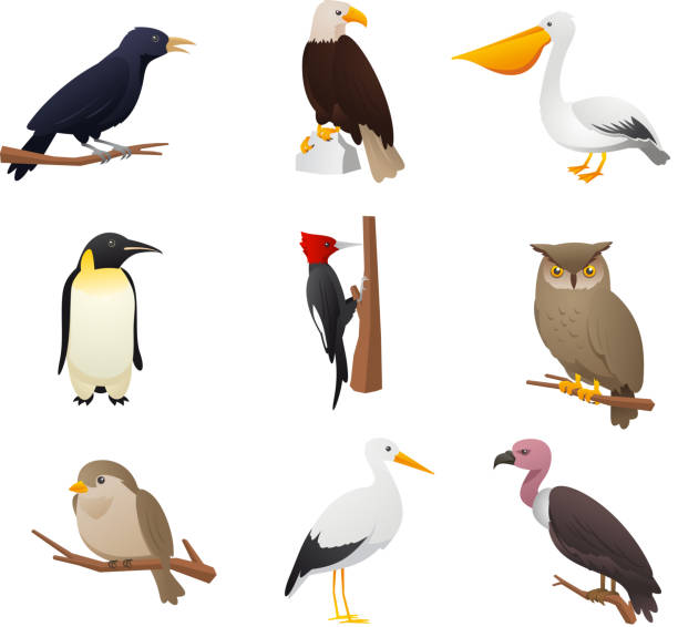 Nine Bird collection 2 Realistic Bird collection, with Owl, Pelican, Woodpecker, Penguin, Eagle, Bird, cardinal and raven vector illustration.  perching stock illustrations