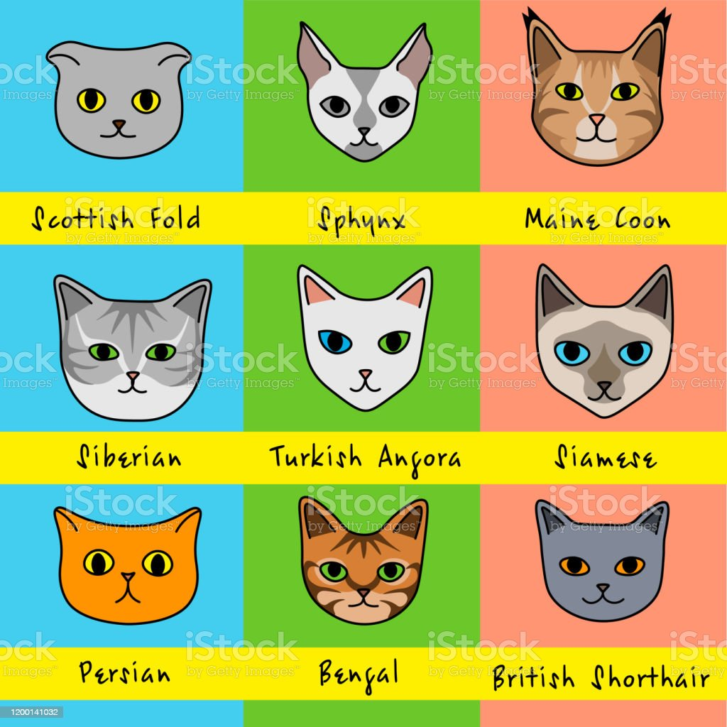 Nine Cat Breeds In Cute Cartoon Style With Names On Bright Colorful Background Stock Illustration Download Image Now Istock
