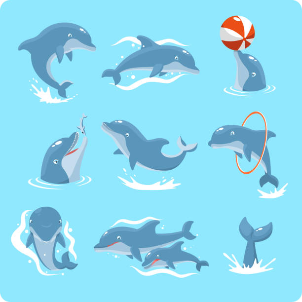 nine dolphin set collection playing with ball and ring - dolphin stock illustrations