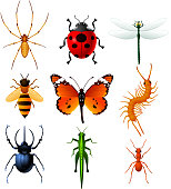 Nine Insects icons set vector illustration collection