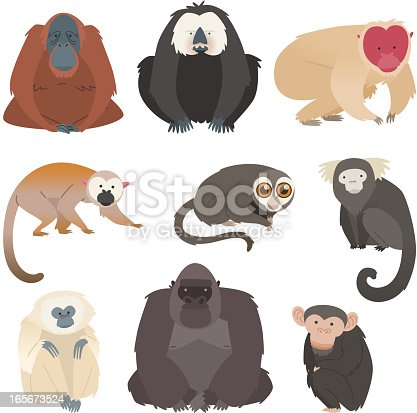 Ape and monkey collection. With monkeys in different species and sizes, like: Pygmy Marmosets, Spider Monkey, Tufted Capuchins, White-faced Saki Monkey, Golden Lion Tamarin, Night Monkey, Howler Monkey, Patas Monkey, Colobus Monkey vector illustration.