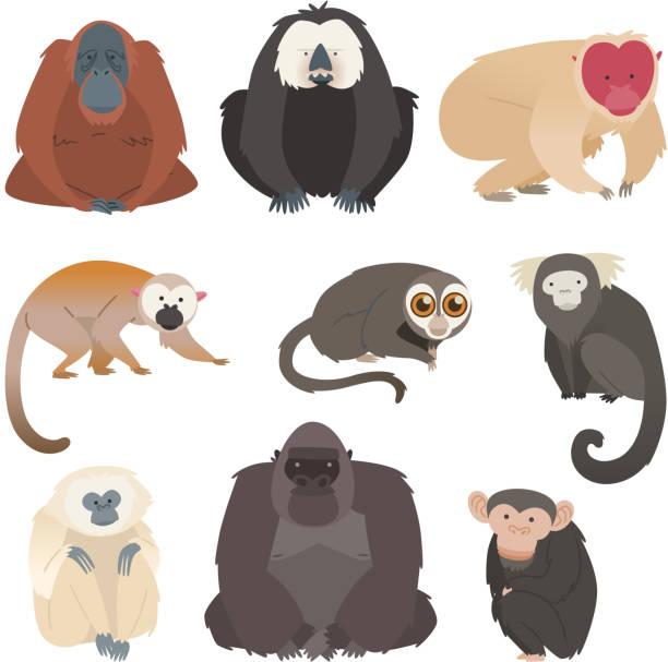 nine monkey ape collection - monkey stock illustrations