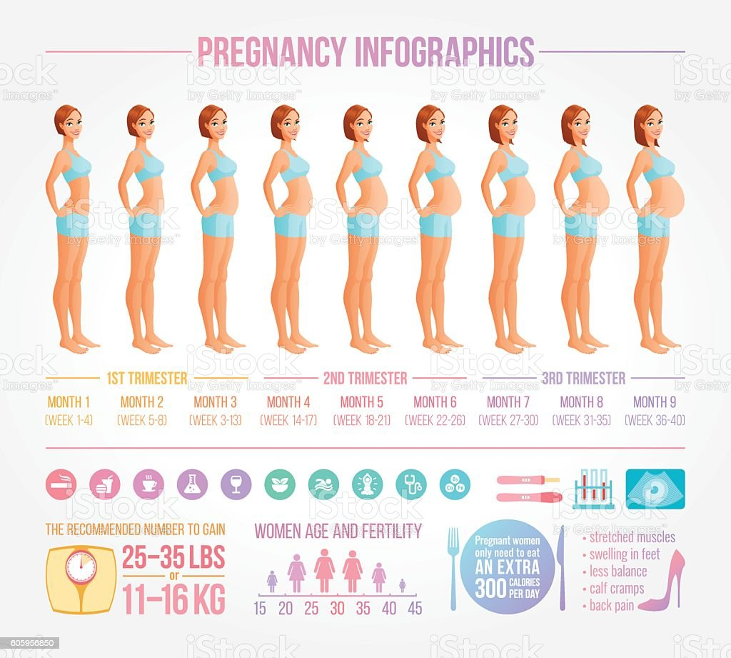 Nine months of pregnancy in progress. Infographic vector set. vector art illustration