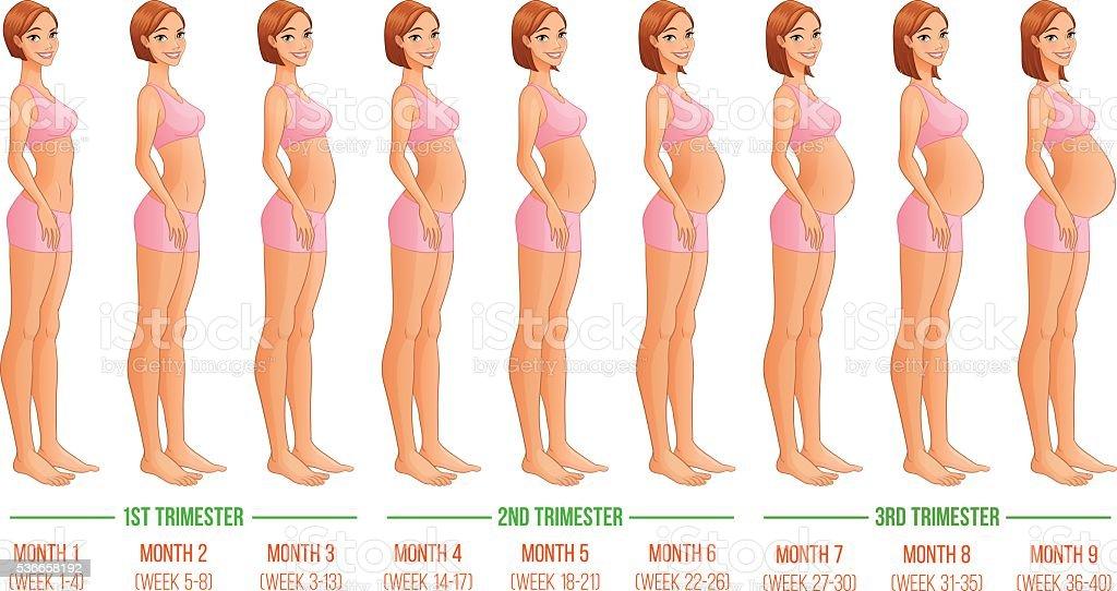 Neun Monate Der Schwangerschaft Entwicklung Vektorillustration Stock