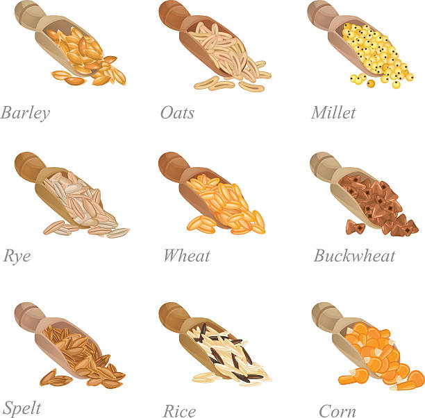 Nine shovels with different cereals in them There are shovels with barley, oats, millet, rye and other popular cereals spelt stock illustrations