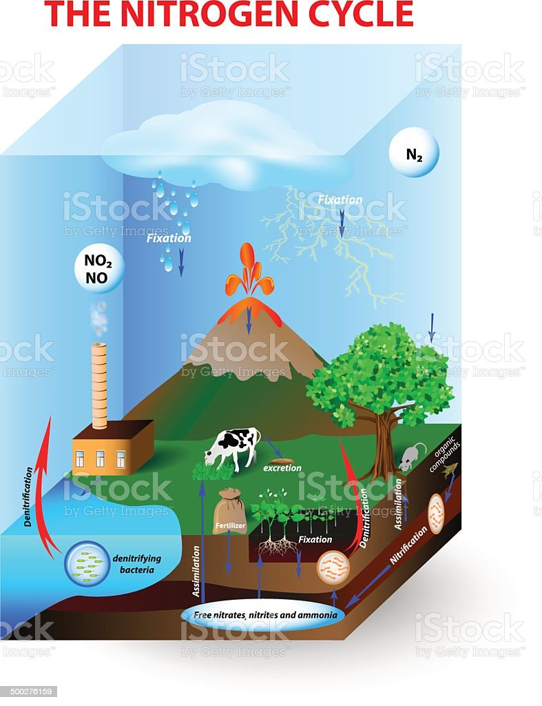 Nitrogen cycle stock vector art more images of abstract nitrogen cycle royalty free nitrogen cycle stock vector art amp more images of abstract pooptronica Images