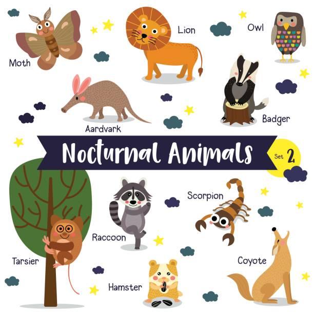 nachtaktives tier cartoon mit tiernamen-vektor-illustration. set 2 - ameisenbär stock-grafiken, -clipart, -cartoons und -symbole
