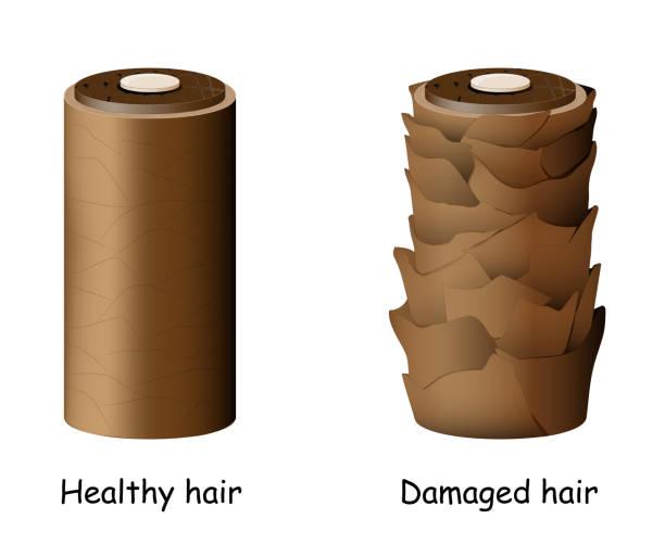 normal and damaged hair. vector art illustration