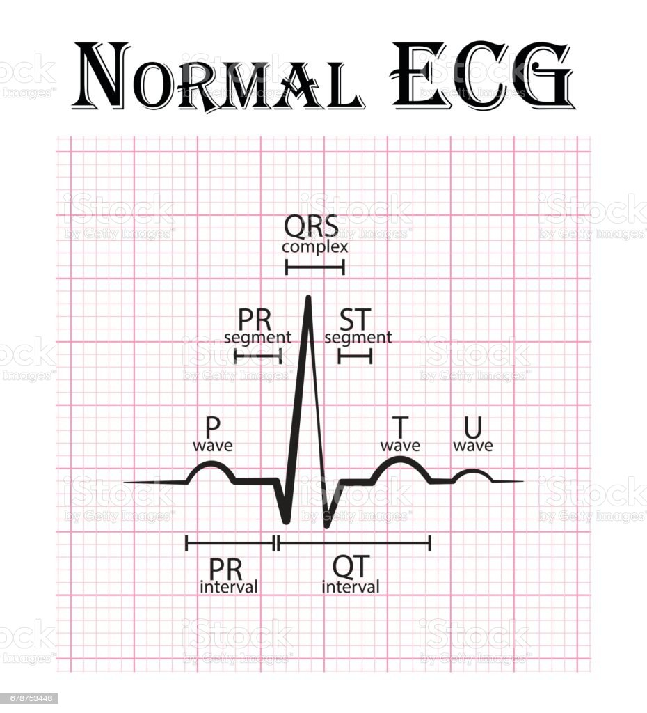Normal ecg stock vector art more images of cardiologist normal ecg electrocardiogram p wave pr segment pr interval qrs pooptronica Images