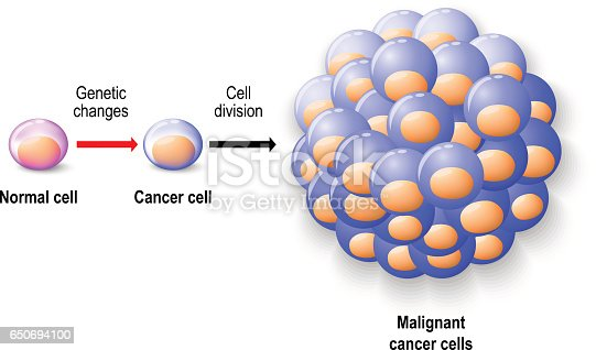Normal human cell cancer cell and malignant cancer stock vector normal human cell cancer cell and malignant cancer stock vector art 650694100 istock ccuart Images