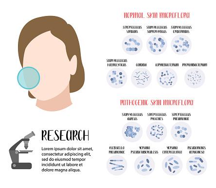 Normal, pathogenic skin microflora. Bacteria. Microbiome. Staphylococcus, Streptococcus, Propionibacterium, Corynebacterium, Candida, Pseudomonas aeruginosa, Yersinia, Klebsiella. Vector flat cartoon