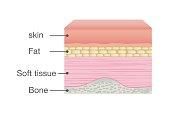 Normal Skin Anatomy of Human.