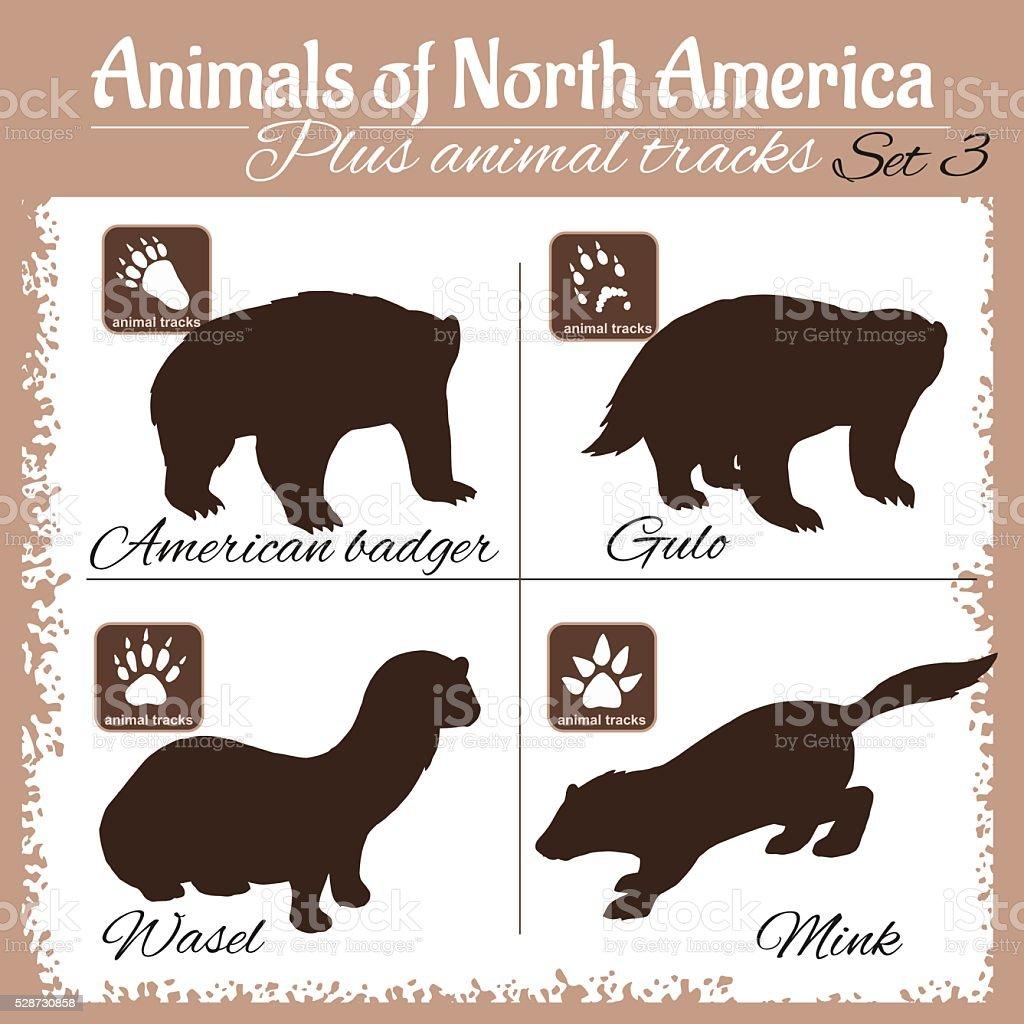 Nord L'Amérique animaux et de titres, au empreintes de pas - Illustration vectorielle