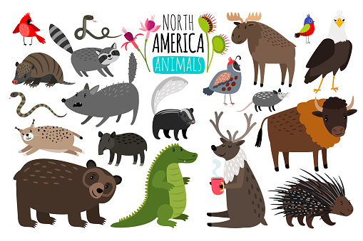 North american animals. Animal graphics of North America, american bison and skunk, cute moose and lynx