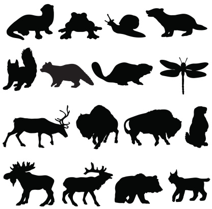 North American animals silhouette collection