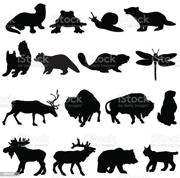 North american animals silhouette collection vector id165659371?b=1&k=6&m=165659371&s=612x612&h=d5txxnmldkfjkhgc2q gmmqooxnxjf8slhkrs6aii9a=