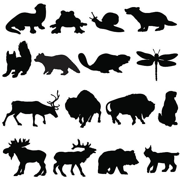 North American animals silhouette collection A selection of vector silhouettes of North American animals. beaver stock illustrations