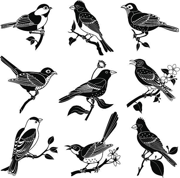 stockillustraties, clipart, cartoons en iconen met north american birds - zangvogel