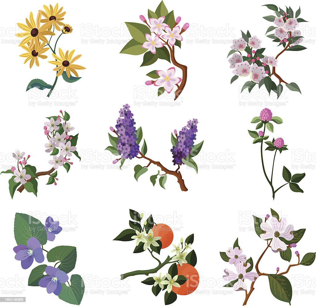 North American flowering plants royalty-free stock vector art