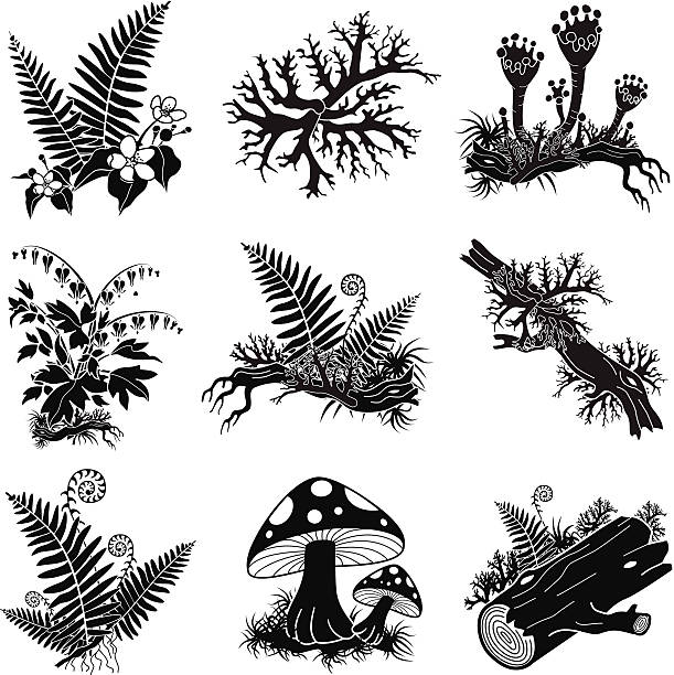 North American forest lichens and plants illustration set A vector illustration of a North American forest lichens and plants illustration set. An EPS file and a large jpg are included in this download. moss stock illustrations