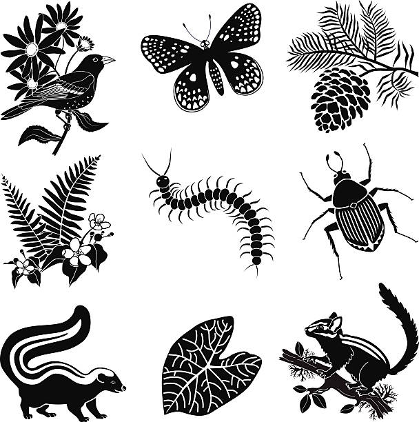 North American forest wildlife icon set in black and white vector art illustration