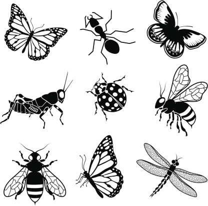 North American insects