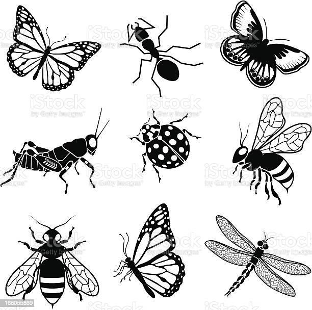North american insects vector id166055869?b=1&k=6&m=166055869&s=612x612&h=lq9nhcbmgtj3bi39oqyletfrpbt78i4l pxl4ruipwq=