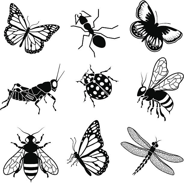 North American insects vector art illustration