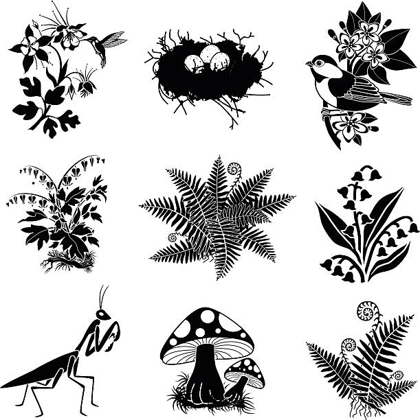 North American wildlife and plants in black and white vector art illustration