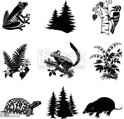 A vector illustration of North American wildlife and plants in black and white including a frog, pine trees, woodpecker, ferns, chipmunk, bleeding heart plant, box turtle and a mole.
