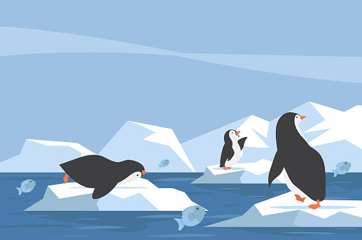North pole Arctic penguin  iceberg with fish