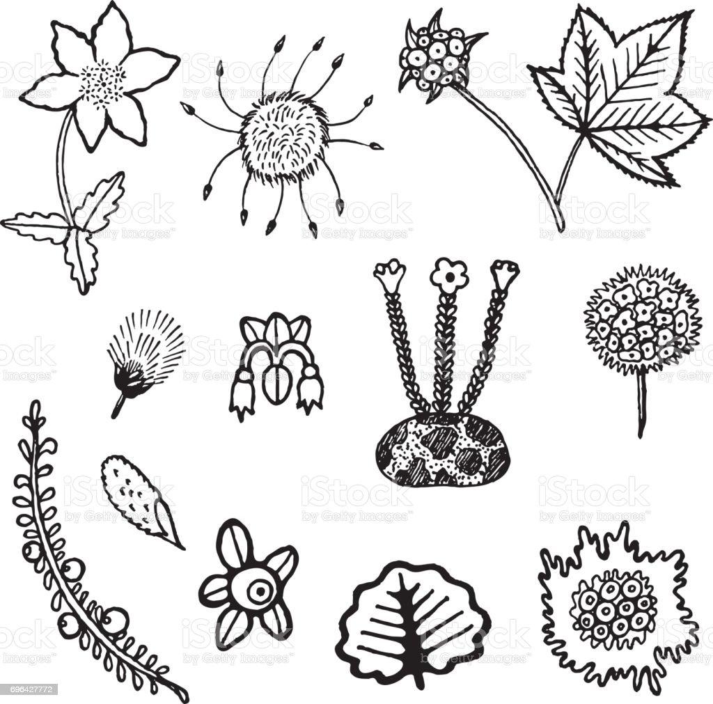 Ilustración de Colección Del Elemento De La Planta De La Tundra Del ...