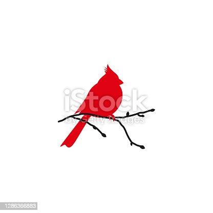 istock Northern cardinal and black branch. Redbird Christmas card. 1286366883