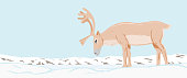 The reindeer graze in the snow-covered tundra. Polar landscape.