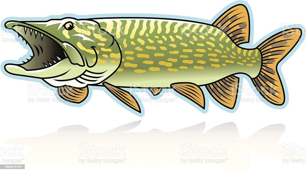 Northern Pike Stock Vector Art & More Images of Aggression 165915161 ...