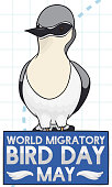 Northern Wheatear over Sign to Celebrate World Migratory Bird Day