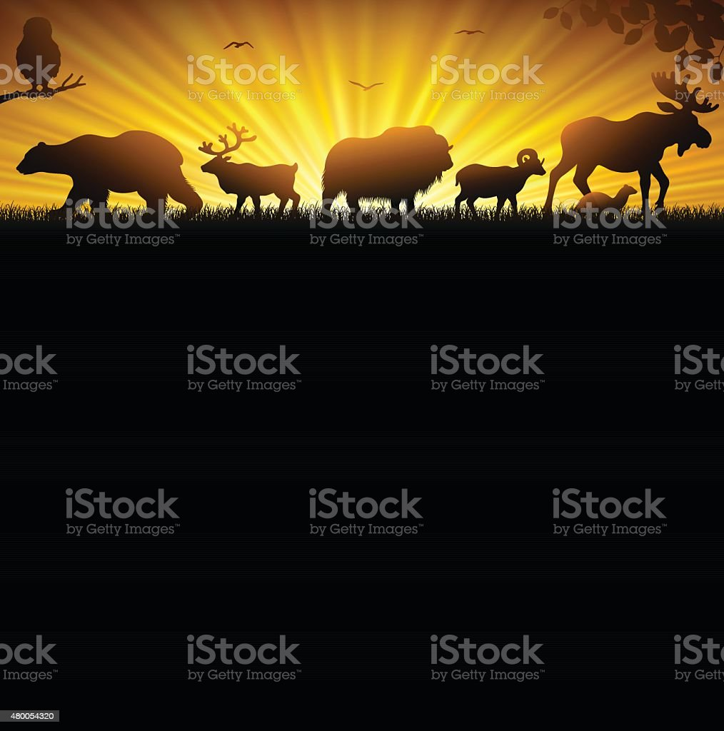 Northern Wild Animals vector art illustration