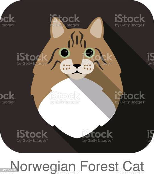 Norwegian forest cat cat breed face cartoon flat icon design vector id491530316?b=1&k=6&m=491530316&s=612x612&h=xgcv729zi6sdcxgutbafvcsvmnytutayowoqh70kjt4=