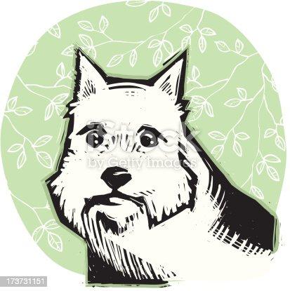 Portrait of a Norwich terrier.