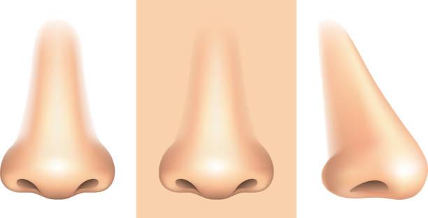 nos na białym tle wektor - nos stock illustrations