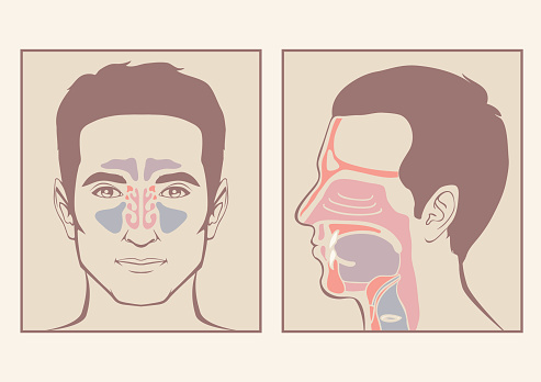 nose, throat anatomy, human mouth, respiratory system