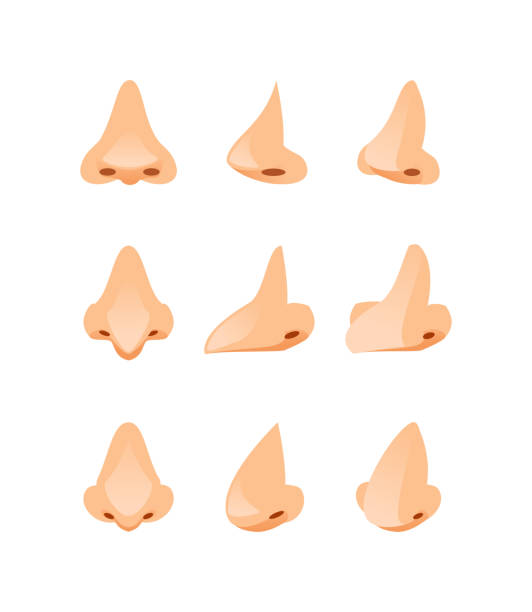 noses in different angles vector - nos stock illustrations