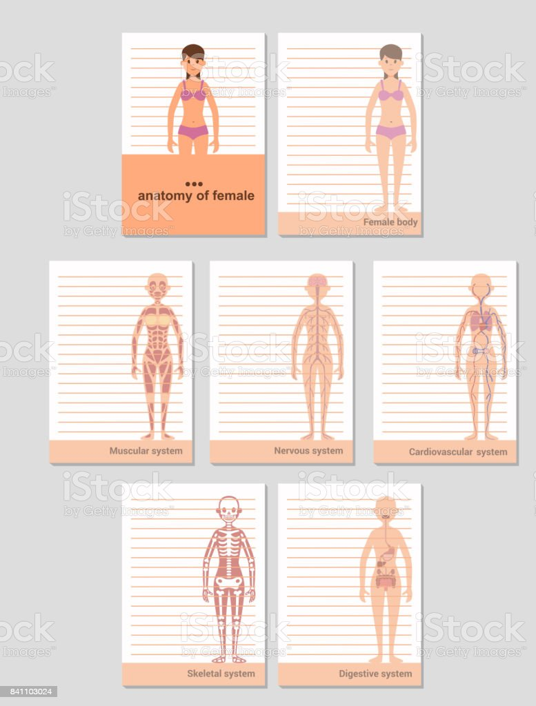 Notepad For A6 Format Records Anatomy Of The Female Body Stock