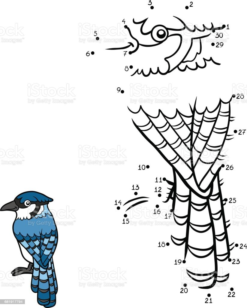 Numbers game, Blue jay vector art illustration