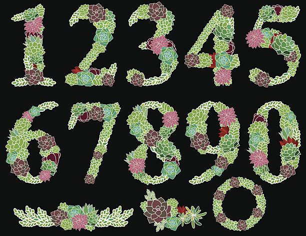 Numbers one to zero Succulent garden vector art illustration