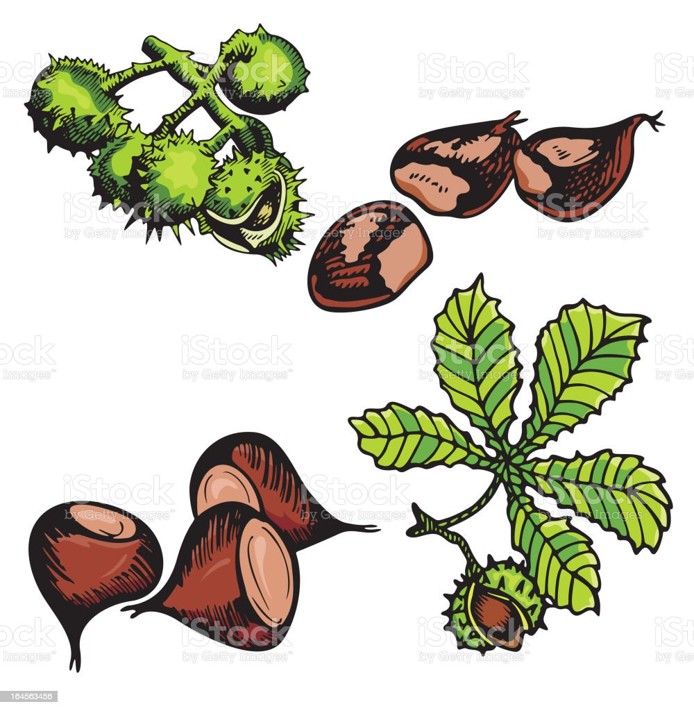 Nut Illustrations III: Chestnuts (Vector) royalty-free nut illustrations iii chestnuts stock vector art & more images of chestnut - food